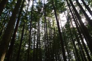 山岳之美-溫哥華Lynn Park