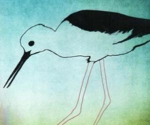【DVD】賴在成龍濕地的候鳥