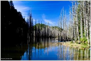 【南投】水漾森林