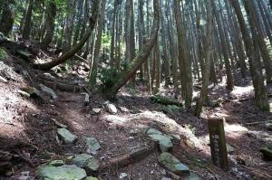 【台中】五星級登山步道-谷關七雄之馬崙山