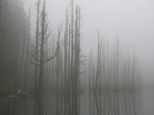 水漾森林順訪眠月神木及鹿屈山
