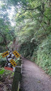 天母水管路步道~台灣獼猴不期而遇