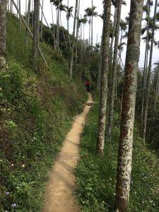 獨立山-大籠頂步道