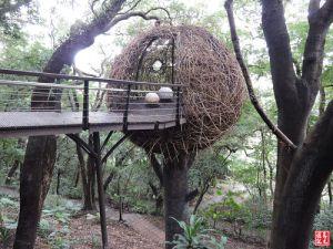 【桃園】虎頭山公園奧爾森林學堂全齡步道