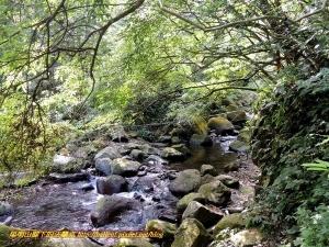 【新北市】紅葉谷瀑布 & 大屯自然公園 隨走