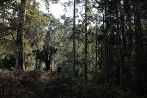 鹿屈山:水漾森林