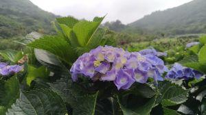 夏日裡的花蝴蝶!