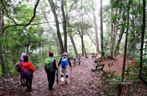 惠蓀林場山嵐小徑步道