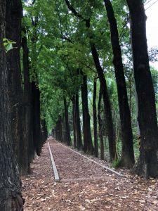 新威森林步道