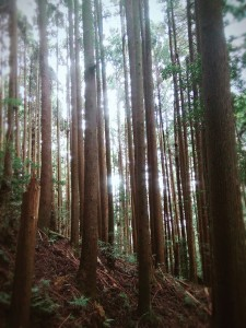 2017/09/16 加里山秋涼糞金龜
