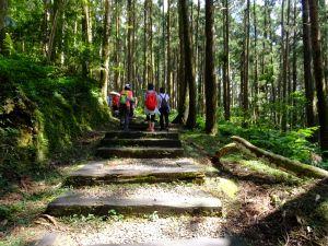桃園東眼山步道、親子峰步道