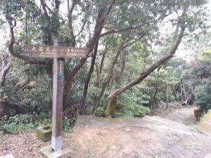 大崙頭尾山親山步道 2017.04.14