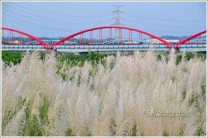 【台南】全台僅有.四橋並渡曾文溪-甜根子草白浪上的曾文溪渡槽橋、自來水管橋