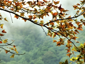 步道小旅行-三峽熊空