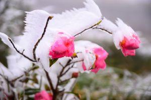 【山旅照片|見晴古道】狂野霧淞之美
