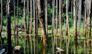 忘憂森林步道