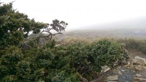 初登百岳-合歡山東峰