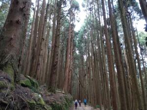 枕木, 鐵道和層層高聳林木的元旦