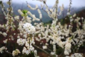 金針山。花
