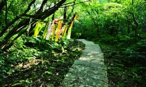 【山林】軟、硬兼施 親近步道更輕鬆