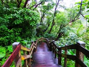 雨櫻虎山溪步道