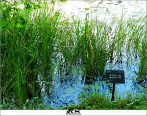 新北烏來福山植物園
