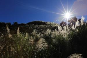茶壺山之太陽與芒花