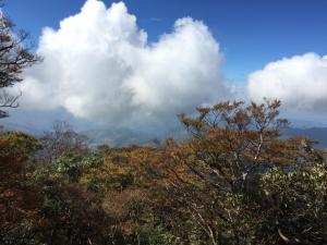 11/13北插天山山毛櫸轉黃盛況