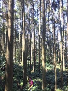 20161106新竹尖石蓮包山