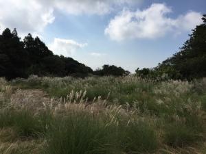 陽明山國家公園~磺嘴山、翠翠谷