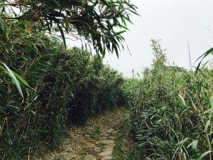 七星山主峰登山步道