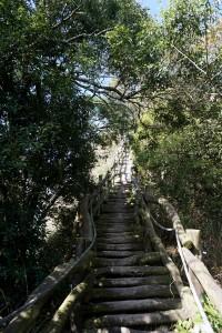 頭嵙山~大坑4號步道
