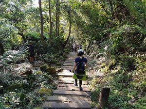 土城桐花公園步道