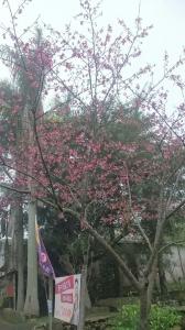 20151226泰安鄉熊佧山