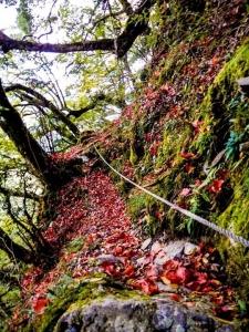 秋末登屏風山賞滿地紅槭