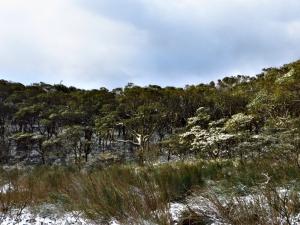白雪覆蓋的向天山/向天池/面天山/二子坪