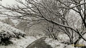 坪林下雪了