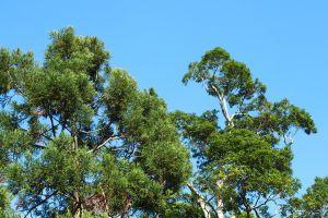 棲蘭森林浴步道