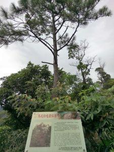 琪哩岸軍艦岩-奇岩丹鳳山