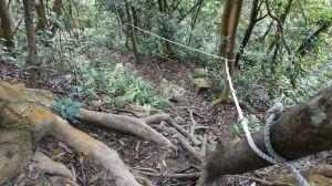 金面山之竹