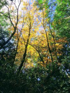秋 / 金黃天空:內鳥嘴山