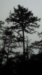 20160214新竹北埔金龜岩,猴洞步道