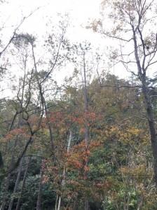 石門水庫楓紅層層