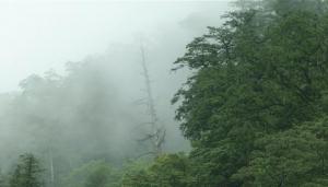 【山林】檜木鄰