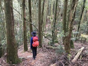 登橫嶺山環走自然步道