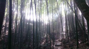 千階竹林峭石壁,百米樹梯上雲峰