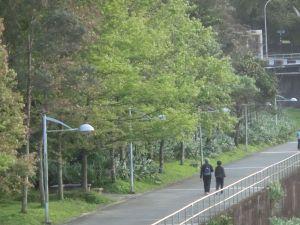 政大環山步道.楓香步道