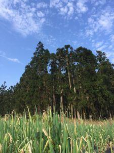 雙連碑環湖步道