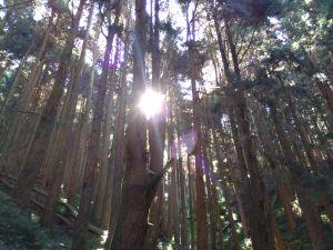 1061223特富野古道+麟趾山