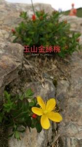 高山足下的花花世界